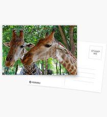 Giraffes Postcards