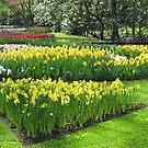Golden Springtime - Keukenhof Gardens von BlueMoonRose
