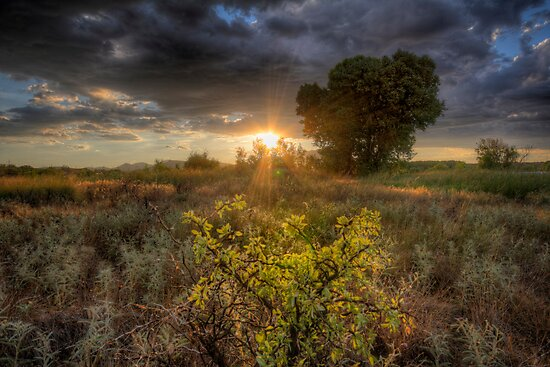 Light Field by Bob Larson