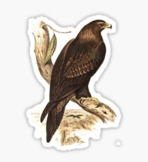 Wedge-Tailed Eagle. Australia's largest bird of prey Sticker