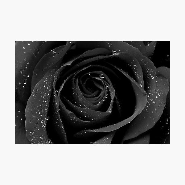 Flowers Black Rose Photographic Print