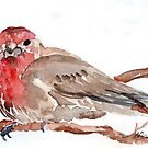 Common Red-poll {Corduelis flammea} by Maree Clarkson