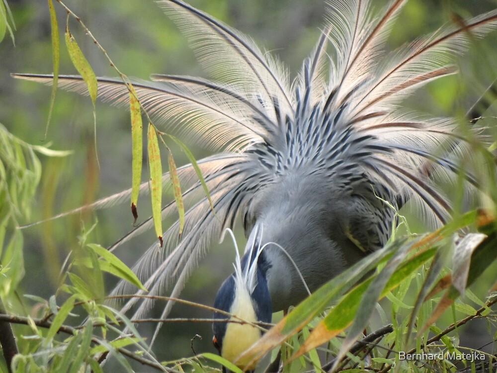 Feathers In Back Light - Plumas En Contraluz by Bernhard Matejka