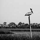 Pelican on a Post by Peggy Berger