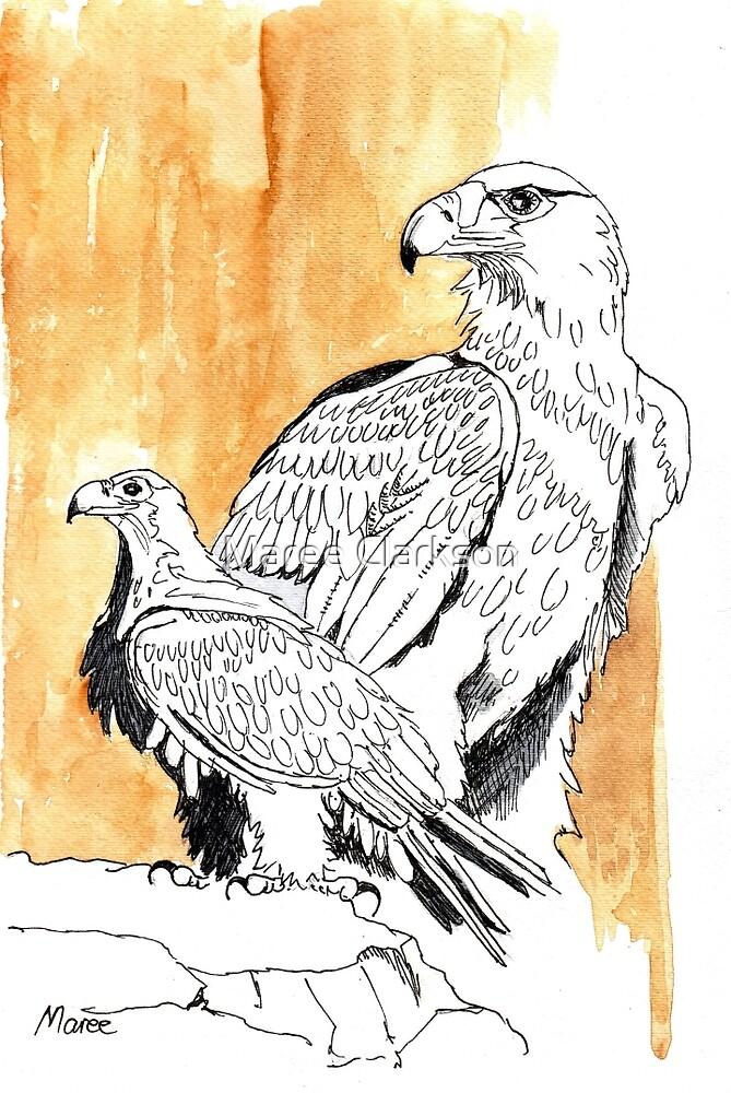 Black Eagle (Aquila verreauxii) by Maree Clarkson