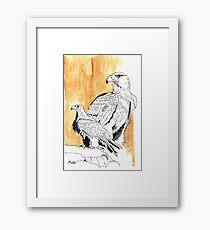 Black Eagle (Aquila verreauxii) Framed Print