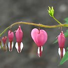 Bleeding Heart by orko