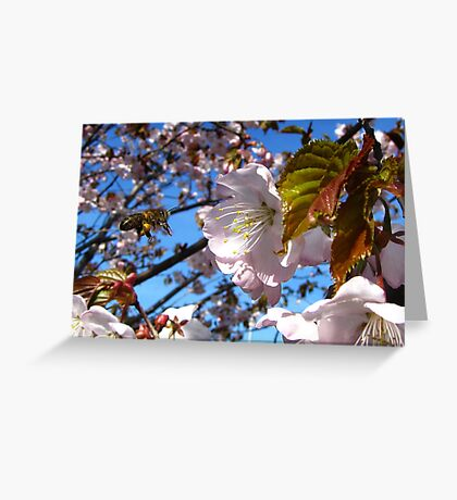 The Spring Mood Greeting Card