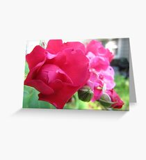 Kennebunk Beach Rose Greeting Card