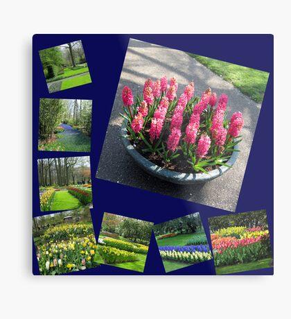Keukenhof Collage featuring Pink Hyacinths Metallbild