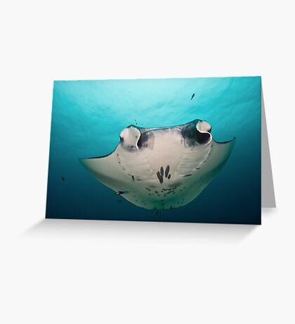 Manta Ray Greeting Card