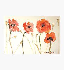 Poppy Tunes Photographic Print