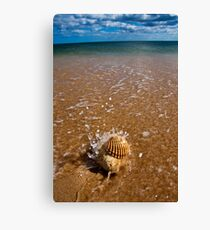 Mollusca house embraced by the Sea  Canvas Print