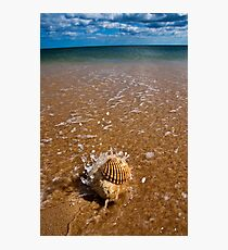 Mollusca house embraced by the Sea  Photographic Print
