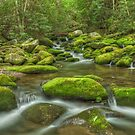 Mossy River Rocks - Roaring Fork River by JHRphotoART