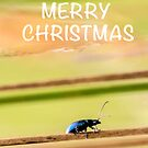 Merry Christmas Beetle by Elysian Photography ~ Art from the Heart
