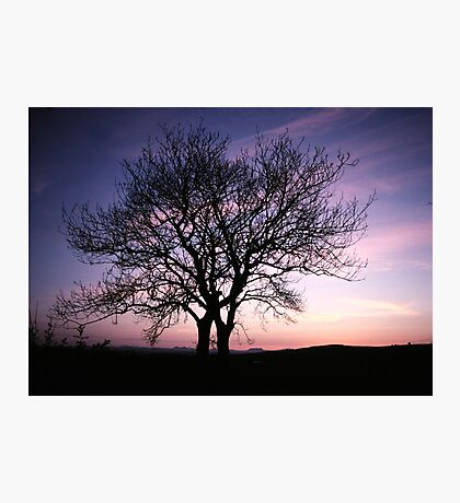 Two Trees embracing Photographic Print