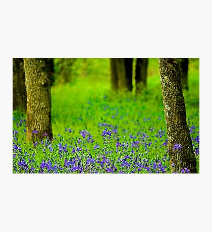 A Little Bit Of Spring Photographic Print