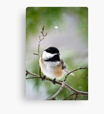 Winter Black Capped Chickadee Canvas Print