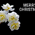 Merry Christmas Daffodil by Elysian Photography ~ Art from the Heart