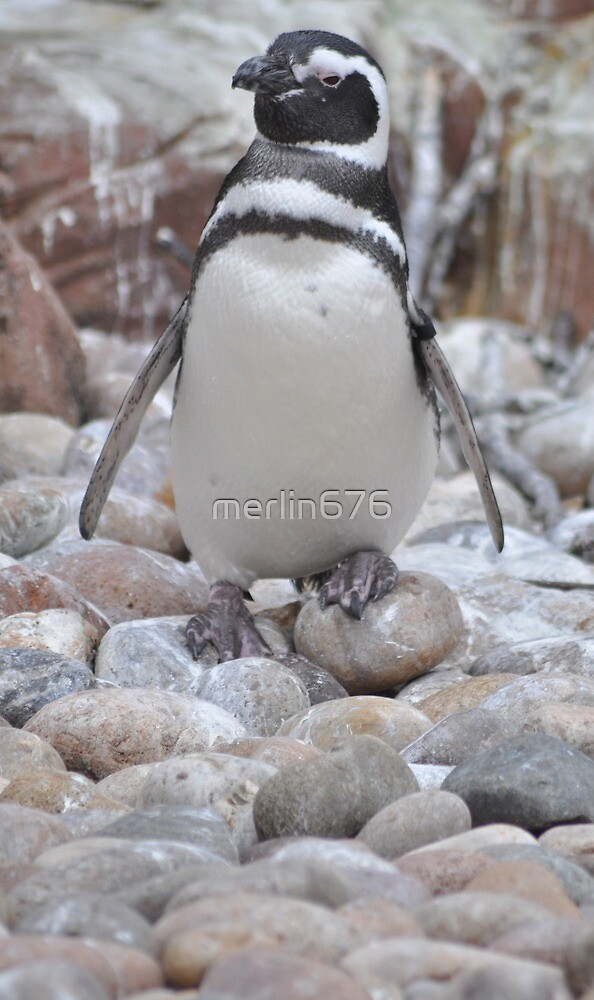 Penguin Chick by merlin676