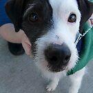 zack, the neighbor dog by tego53