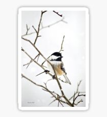Charming Chickadee Winter Bird Art Sticker