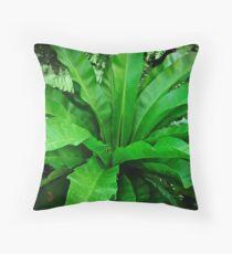 Birds Nest Fern - Asplenium nidus Throw Pillow