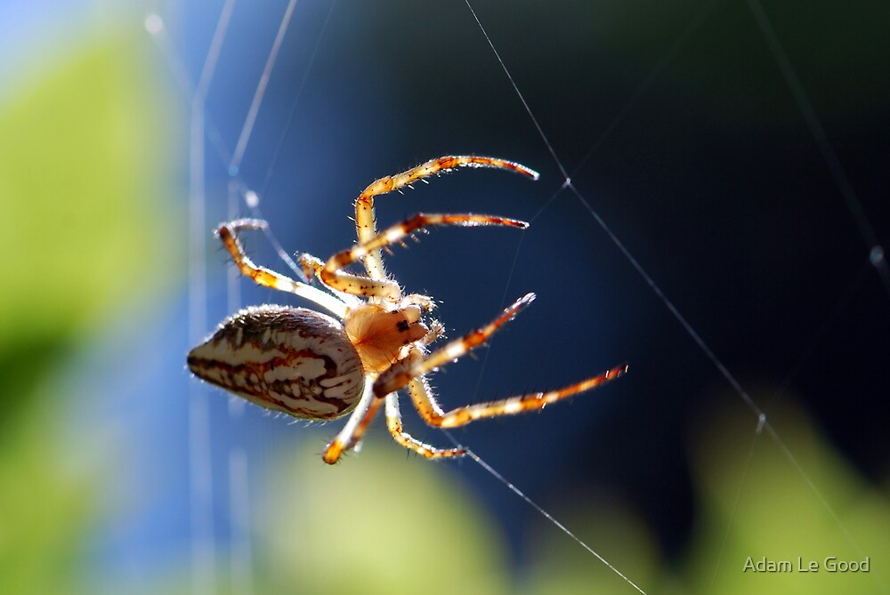 Another Spider... by Adam Le Good