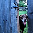 Can I Come Out and Play by aprilann