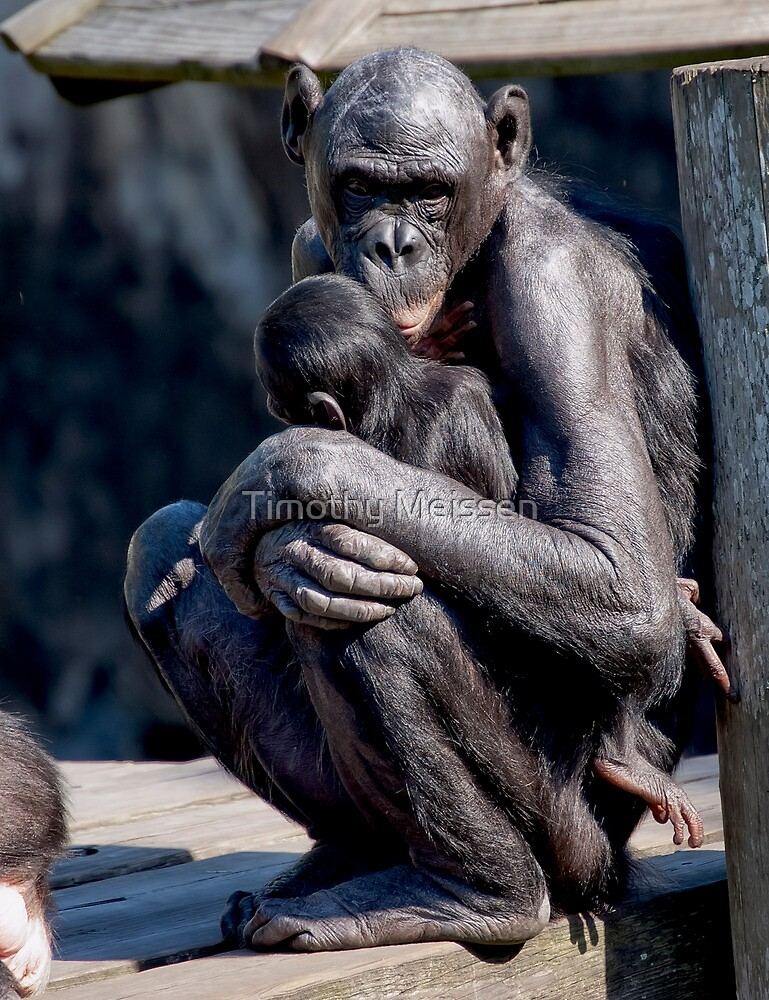 Mother and Child by Timothy Meissen