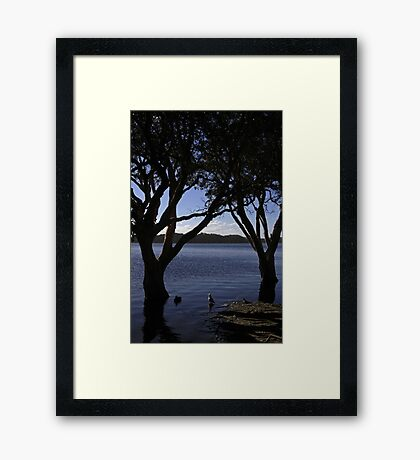 The Duck, The Seagull and The Top Knot Pigeon Met By The Lake Framed Print