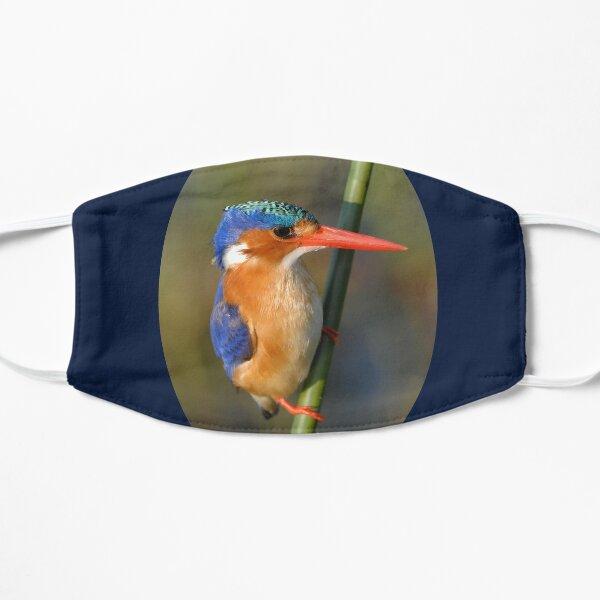 Malachite Kingfisher on reed Mask