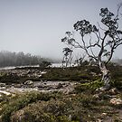 Mt Field National Park by Anthony Evans
