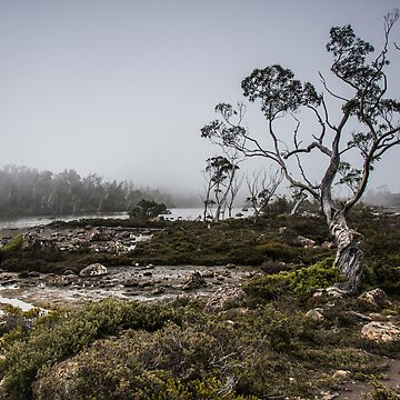 Mt Field National Park by Evolve