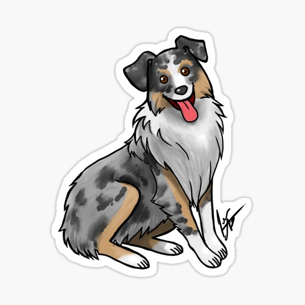 Australian Shepherd - Blue Merle Sticker