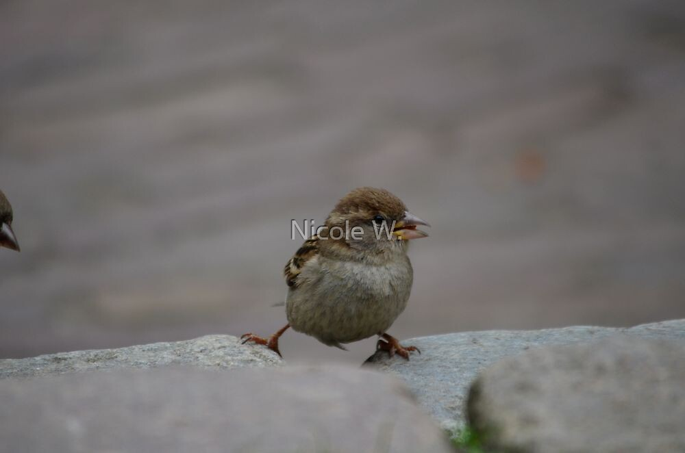 Adorable young sparrow balancing by Nicole W.