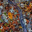 Nature's Tapestry - Mount Campbell by TonyCrehan