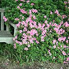 A Seat By The Flowers by Cora Wandel