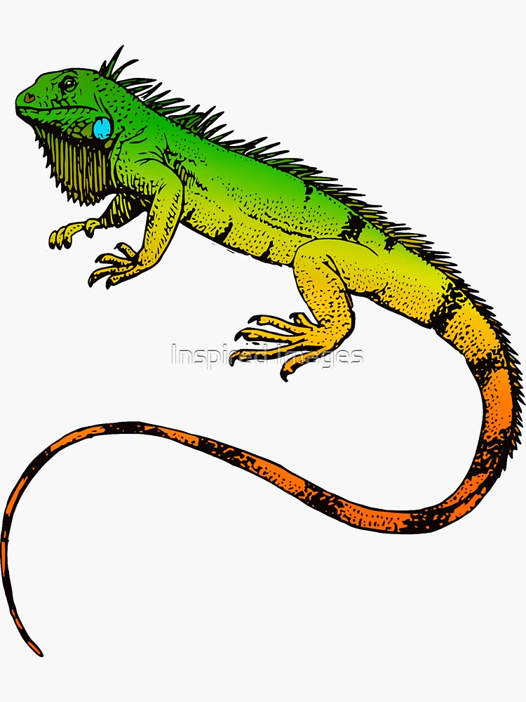 Iguana verde de ImageMonkey