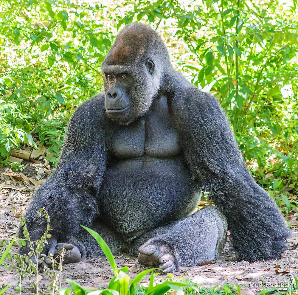 Gorilla 03 by Mark Fendrick