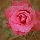 Pink Rose by Margherita Bientinesi