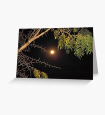 Haloed Super Moon - a thorny issue with Acacia Karroo Greeting Card