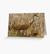 Sandhills on the Refuge Greeting Card
