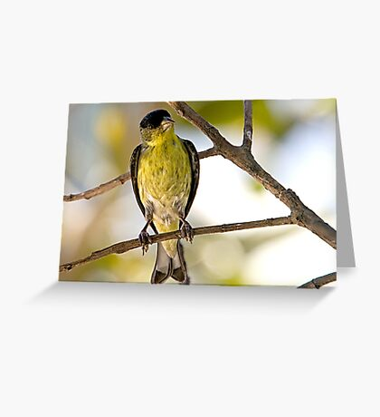 Female Lesser Goldfinch Greeting Card
