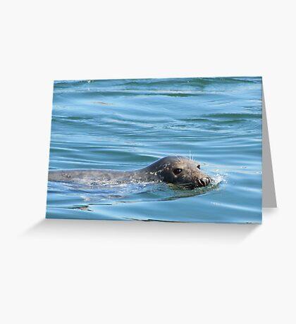 Saturday Afternoon Swim Greeting Card