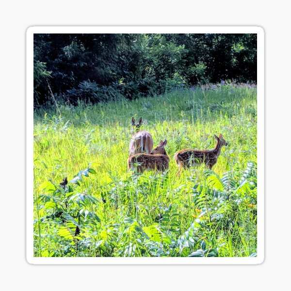 Wild Deer Sticker