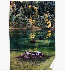 Diablo Lake Stump Poster