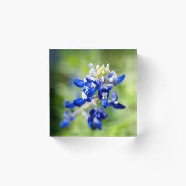bluebonnet Acrylic Block