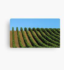 rows of vines Leinwanddruck